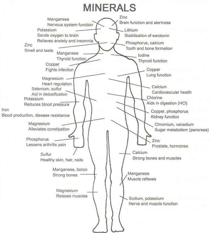 mineraler i kroppen